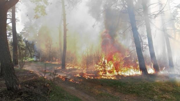 Пожар - горски фонд