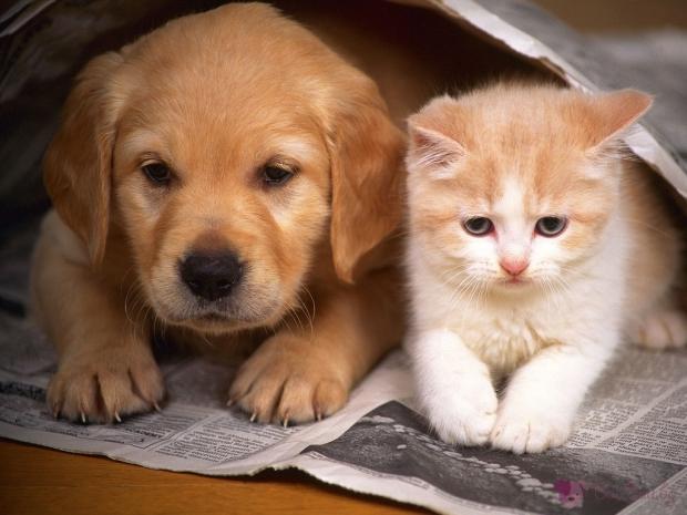 Кампания за намаляване популацията на бездомните животни
