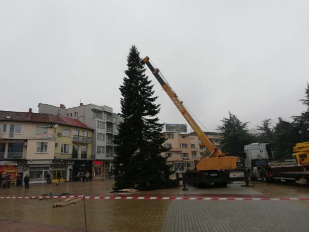 Казанлъчани посрещнаха Коледната елха