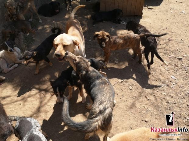 Кучета приют
