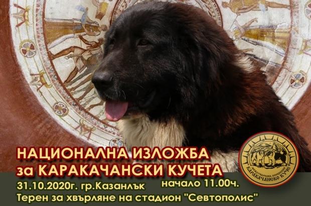 Национална изложба на Каракачански кучета - Казанлък 2020