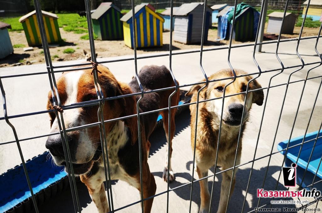 16 години в грижа за бездомните животни в Казанлък, в момента се провежда кампания за кастрация на котки и кучета